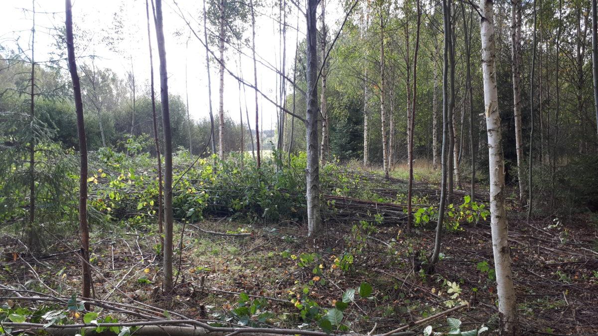 vossakasvanud heinamaa metsaomanik sander blogi metsaühistu