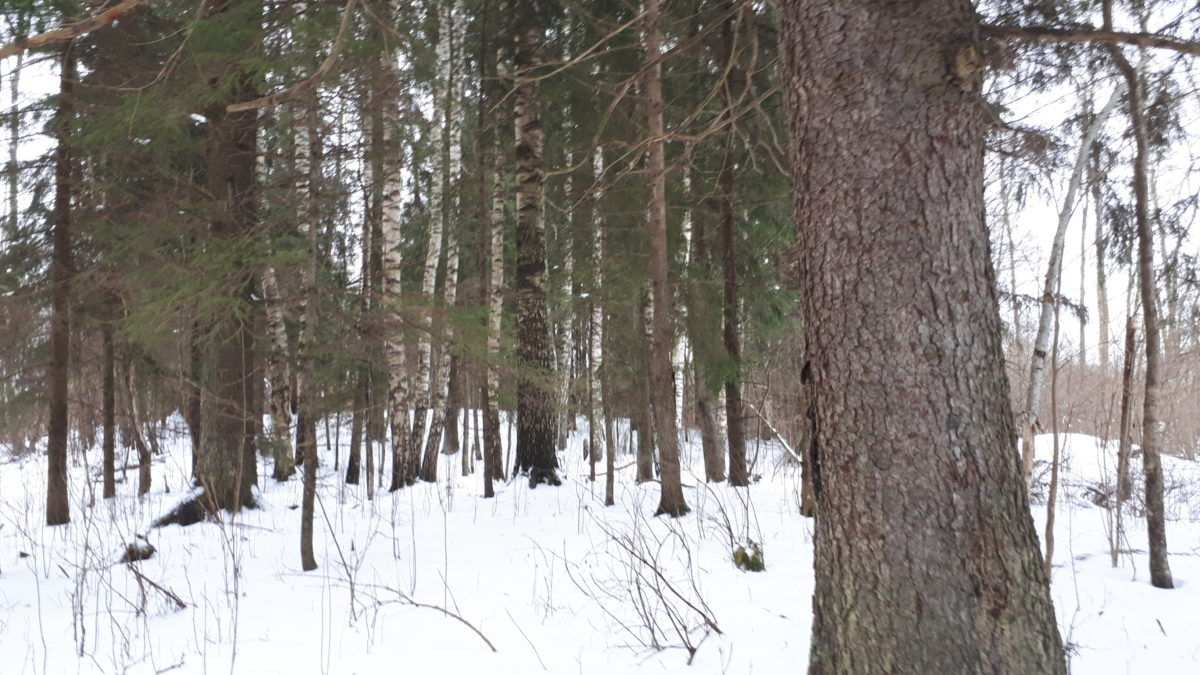 Väike retk metsa