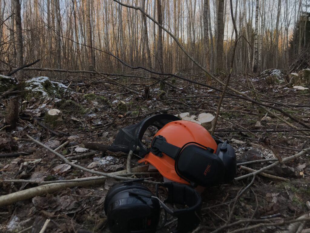 Valgustusraie- Metsaomanik Sander blogi - Metsaühistu