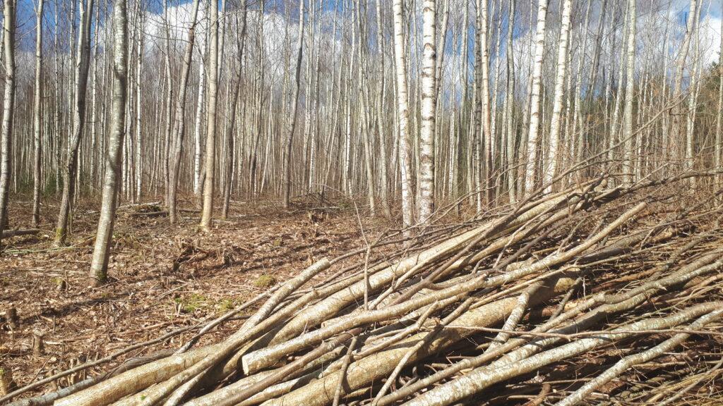 Valgustusraie-Metsaühistu